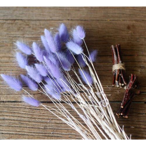 50pcs /bouquet de lapin queue Lagurus Ovatus herbe fleurs séchées Home Decor TY1 2