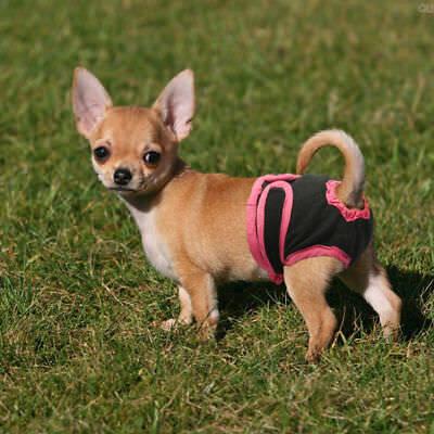 Dog Nappy Diaper Incontinence Season Pants Adjustable Black Purple Season Puppy 2