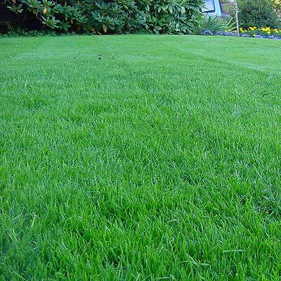 GroundMaster HardWearing Tough Garden Premium Back Lawn Grass Seed Various Sizes 4