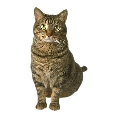 Bioflow Magnetic Cat Collar 2