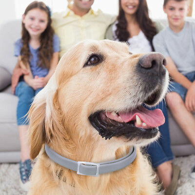 Adjustable Flea and Tick Collar for Pet Dog Cat 8 Months Protection Small Large 11