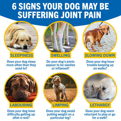 JOINTSURE Dog Joint Supplement More Active Ingredients Than The Leading Brand 8