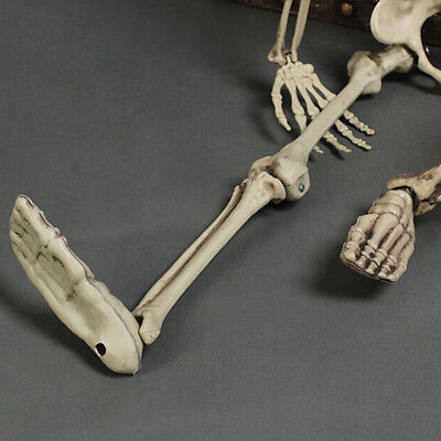 5.6ft Halloween Poseable Human Skeleton Full Life Size Props Party Decoration 7