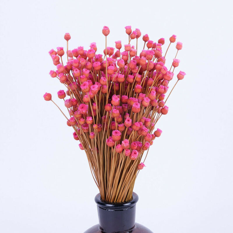 50Pcs Pressed Flowers Real Natural Green Dried Flowers DIY Floral-Decors