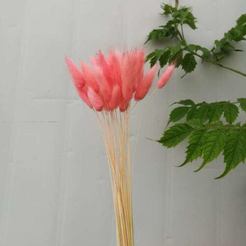 50pcs /bouquet de lapin queue Lagurus Ovatus herbe fleurs séchées Home Decor TY1 4