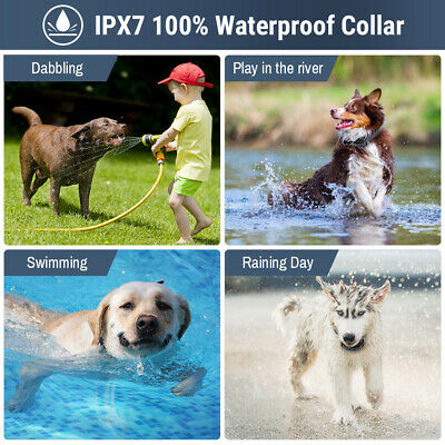 Petrainer Waterproof Rechargeable Dog Training Collar Shock Collar with Remote 6