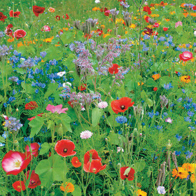 100% Wild Flower Seed Mix Annual Meadow Plants Attracts Bees & Butterfly 3