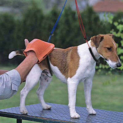 Haunch Holder Grooming Harness Noose System For Dogs Restraint No Sit Leash Loop 9