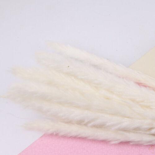 15PC natürliche getrocknete Pampas Gras Reed Hochzeit Blumenstrauß Dekors #B1Y