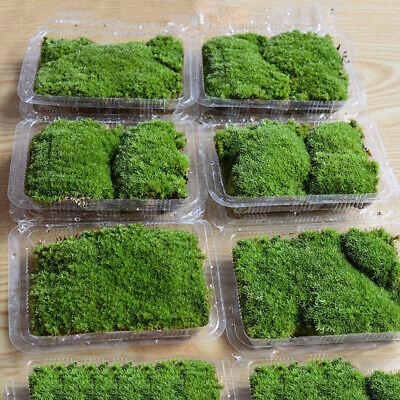 Natural Moss Live Water Grass Aquatic Plant Fish Tank Aquarium Plants Bonsai 9