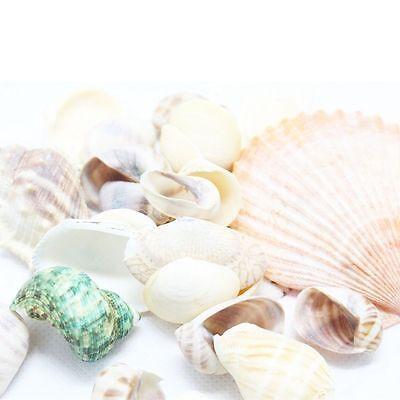 Fashion Aquarium Beach Nautical DIY Shells Mixed Bulk Approx 100g Sea Shell 3C