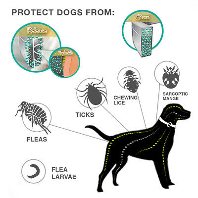 Dewel Flea and Tick Collar for Medium Large Dogs Over 18lbs 8 Month Protection 4