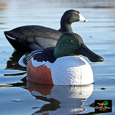 6 Avery Greenhead Gear GHG Over Size Duck Shoveler Decoys Weighted Keels Floater