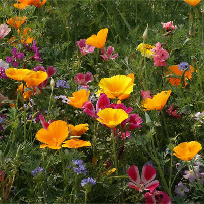 100% Wild Flower Seed Mix Annual Meadow Plants Attracts Bees & Butterfly 2