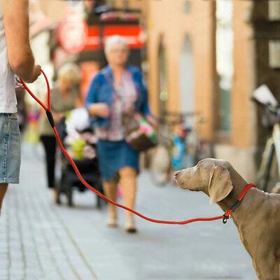 Nylon Rope Slip Dog Lead 5ft Pet Collar Training Show Leash Red Black Blue Brown 8