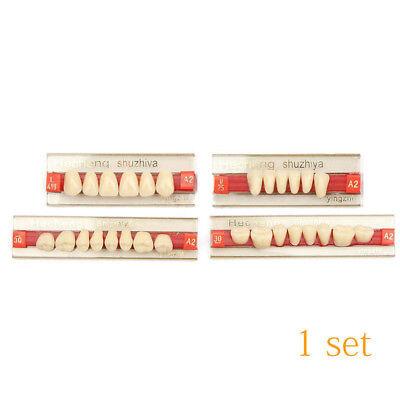 Résine Acrylique Prothèse 84 Dent VITA Color Supérieurs Inférieur Ombre TYZ 4