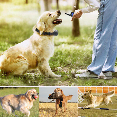 Petrainer Rechargeable Dog Training Shock E Collar for Small Medium Large Dogs 6