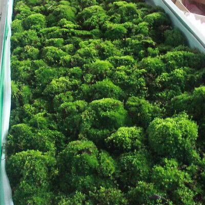 Natural Moss Live Water Grass Aquatic Plant Fish Tank Aquarium Plants Bonsai 10
