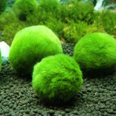 Marimo Moss Ball Filter Live Aquarium Aquatic Plants Decor  Fish Shrimp Tank Pet