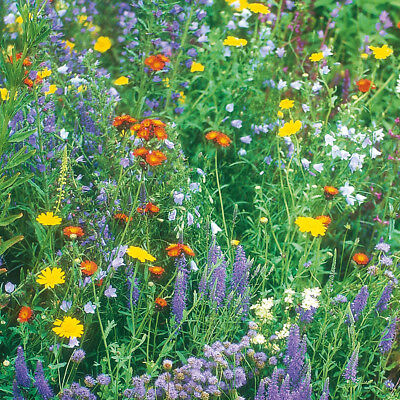100% Wild Flower Seed Mix Annual Meadow Plants Attracts Bees & Butterfly 4
