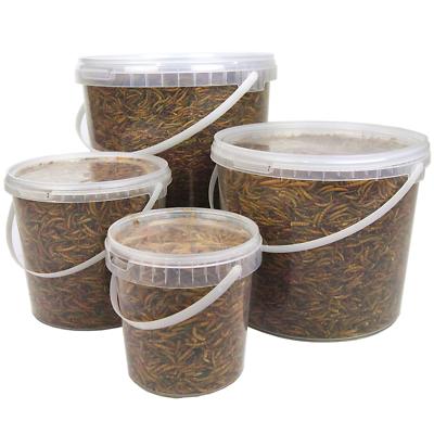 SQUAWK Dried Mealworms - Premium Quality Wild Bird Food Garden Snacks For Birds 4