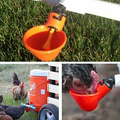 20 Pcs Poultry Water Drinking Cups Plastic Poultry Chicken Hen Automatic Drinker 4