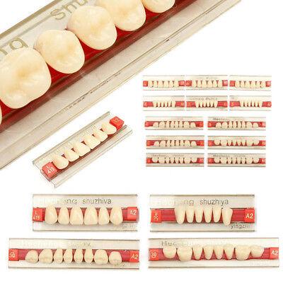 Résine Acrylique Prothèse 84 Dent VITA Color Supérieurs Inférieur Ombre TYZ 3