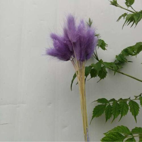 50pcs /bouquet de lapin queue Lagurus Ovatus herbe fleurs séchées Home Decor TY1 3