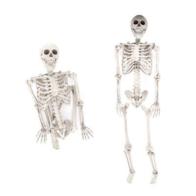 5.6ft Halloween Poseable Human Skeleton Full Life Size Props Party Decoration 9