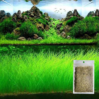10G Bulk Aquarium Grass Mixed Seeds Water Aquatic Home Fish Tank Plant Decor