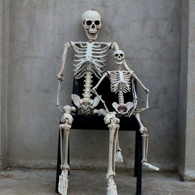 5.6ft Halloween Poseable Human Skeleton Full Life Size Props Party Decoration 4
