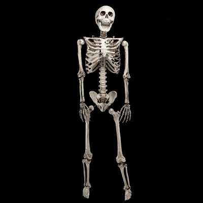 5.6ft Halloween Poseable Human Skeleton Full Life Size Props Party Decoration 8
