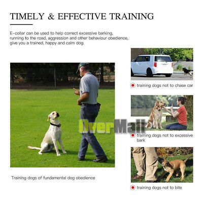 Waterproof 1000 Yard 2 Dog Shock Training Collar Pet Trainer With Remote 4 Modes 5