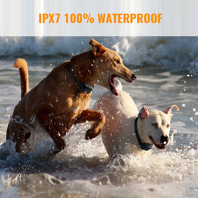 Petrainer Waterproof Rechargeable Dog Training Shock Collar With Remote 2 Dogs 3