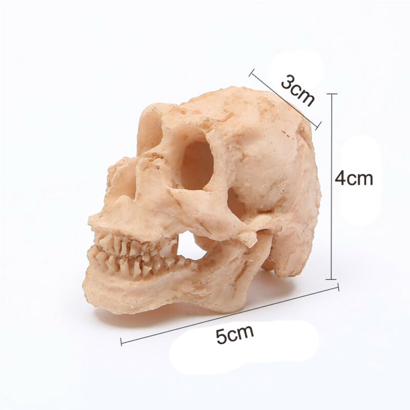 Head Skull Decor Resin Skull Ornament Aquarium Fish Tank Decoration Accessories