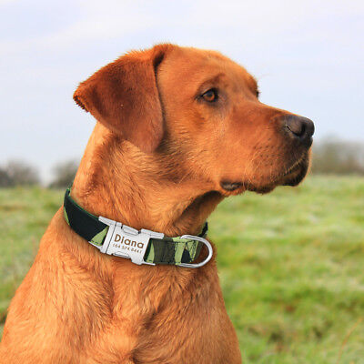 Personalized Dog Collar Heavy Duty Buckle Engraved ID Name Custom Labrador S M L 9