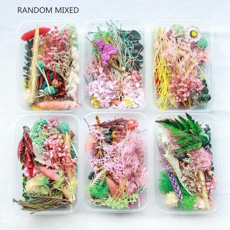 1Box Real Dried Leaf Flowers Plant For Craft Candle Epoxy Resin Jewelry Making 2
