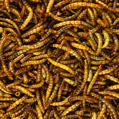 SQUAWK Dried Mealworms - Premium Quality Wild Bird Food Garden Snacks For Birds 3