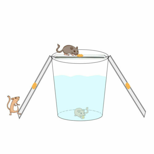 Rolling Mouse Trap Live Catch Release Bucket Spin Mice Cather Rats Rodents Hot 7