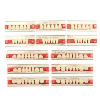 Résine Acrylique Prothèse 84 Dent VITA Color Supérieurs Inférieur Ombre TYZ 2