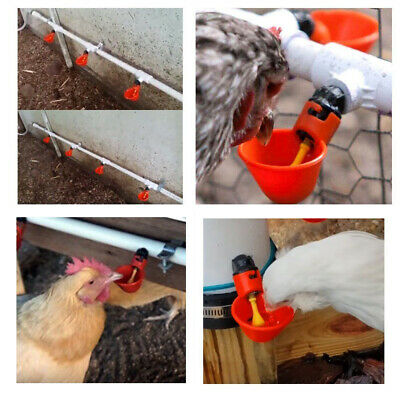 Automatic Cups Water Feeder Drinker Chicken Waterer Poultry Chook Bird 7