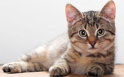 Trixie Cat Kitten Snack Treat Ball Play Boredom Breaker hours of fun 41362 6CM 2