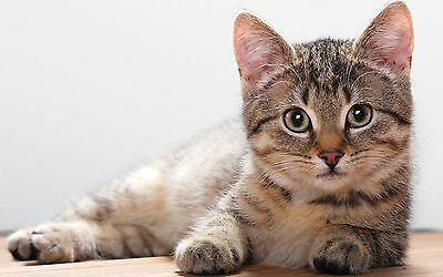 NEW Cat Kitten Dog Plush Cushy Cave Bed Beige Medium 36282 3