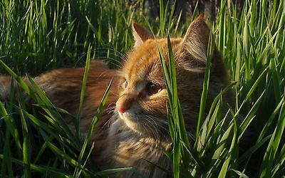 Organic Cat Oat Grass  ✅Fully grown in 14 days. ✅Pets love✅BUY 2 GET 2 FREE