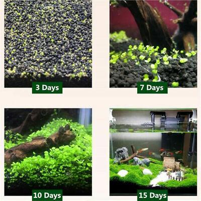 LIVE AQUARIUM AQUATIC Plant Seeds Fish Tank Grass Decor Foreground  aquascaping