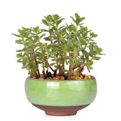Lovely Mini Ice-Crack Glaze Flower Ceramics Succulent Plant Pot Flowerpot Decor 7