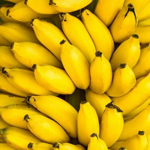 semillas del árbol de plátano mini jardín bonsai semillas de frutas raras 2