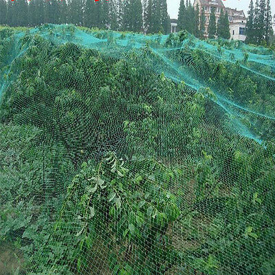 Commercial Fruit Tree Plant Knitted Anti Bird Netting Pest Net Mesh 4x10M-120M