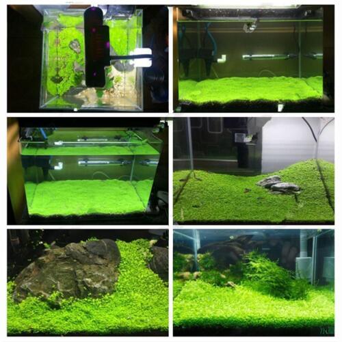 1000X Bulk Aquarium Mixed Grass Seeds Water Aquatic Home Fish Tank Low Price 2