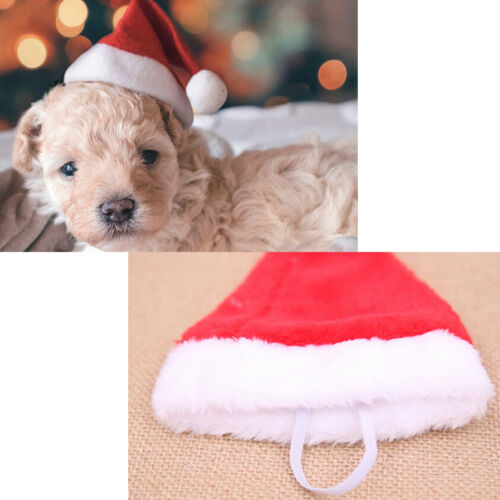 Christmas pet santa hat small puppy cat dog xmas holiday costume ornamentY lq 6